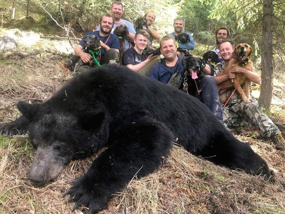 Jakt på svartbjørn i Canada