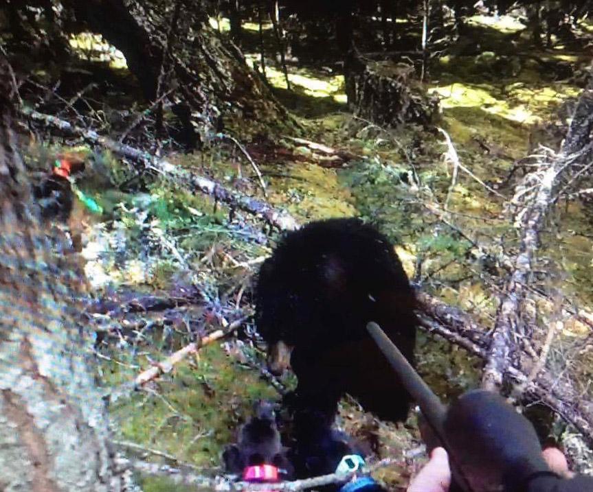 Svartbjørn veldig nære!