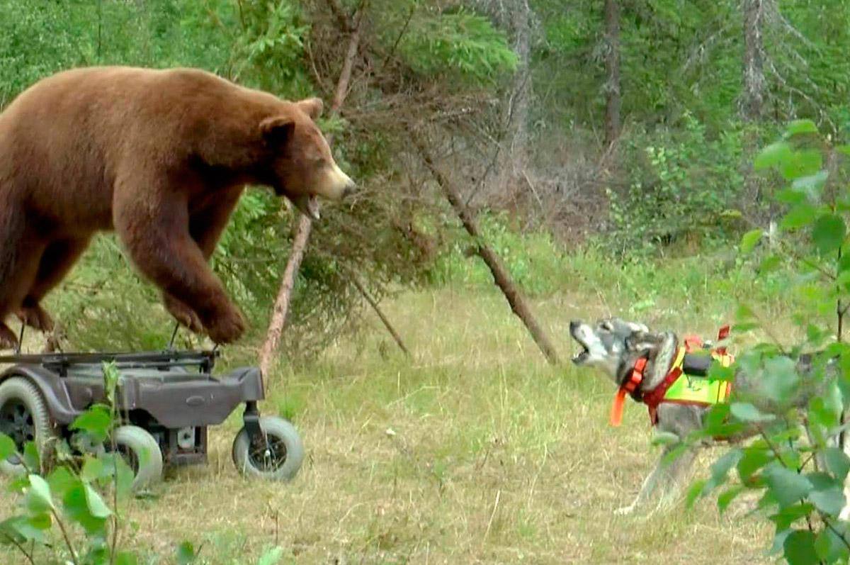Permobjørn og hund