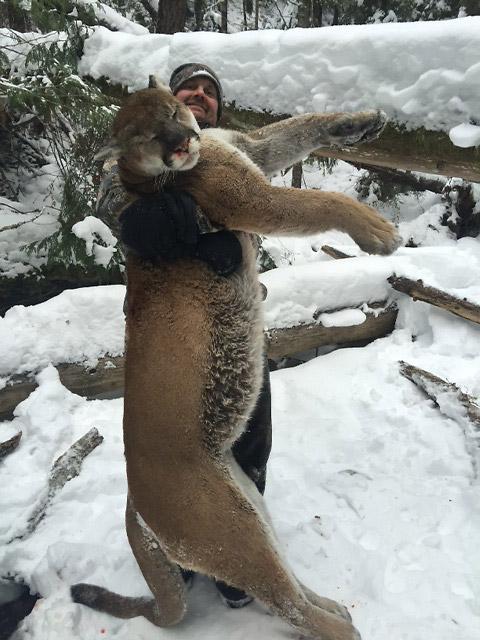 Pumajakt i Canada